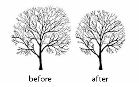 Tree crown reduction and thinning