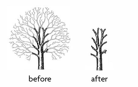 Tree pollarding